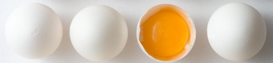 banner-eggs