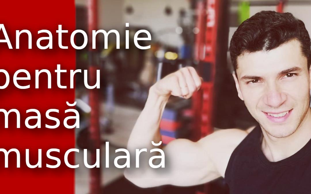 Care sunt cele mai eficiente exerciții pentru masă musculara?